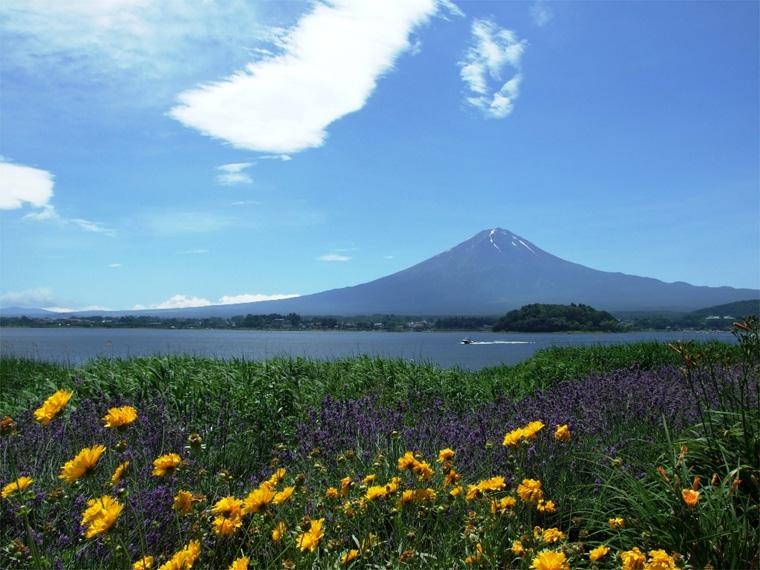 夏の花と富士