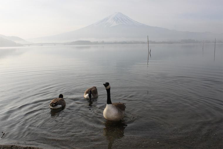 富士山とシジュウカラガン