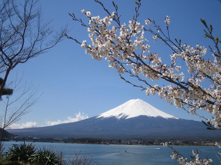 桜・富士山