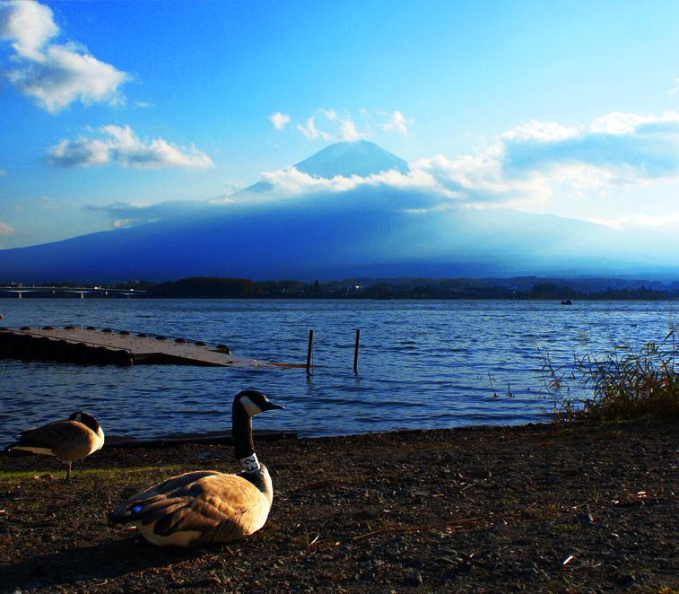 雁と富士山